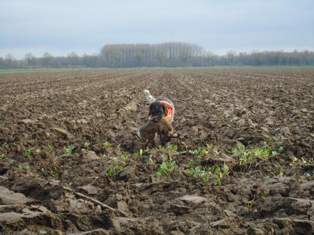 Biesbosch15 (9)