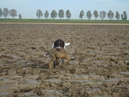 Biesbosch2011-1