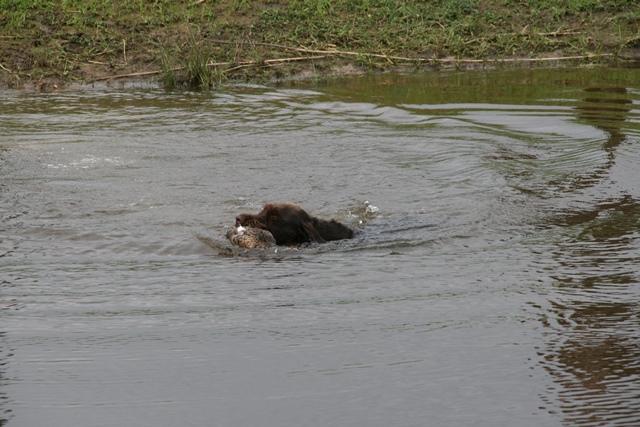 FritsJATzwemmen