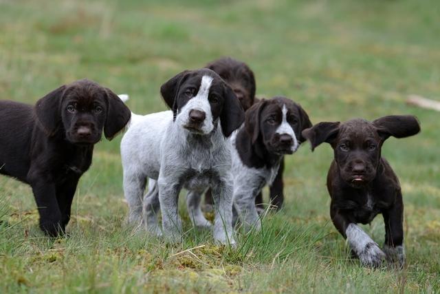 PuppiesBos (10)