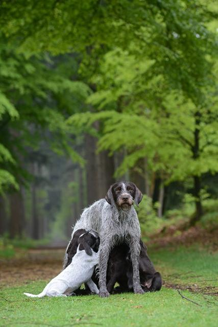 PuppiesBos (11)