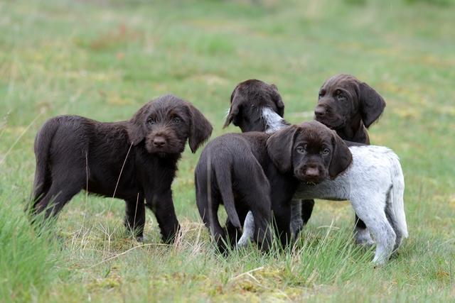 PuppiesBos (13)