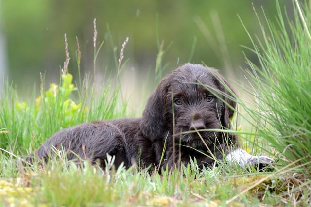PuppiesBos (16)