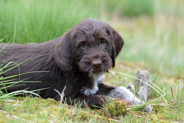 PuppiesBos (20)