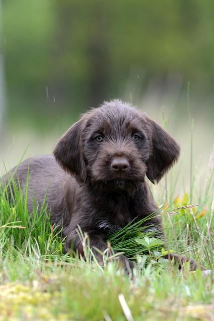 PuppiesBos (22)