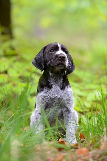PuppiesBos (4)