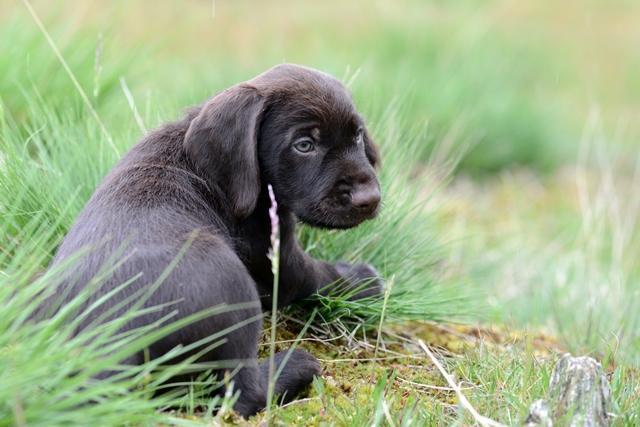 PuppiesBos (6)