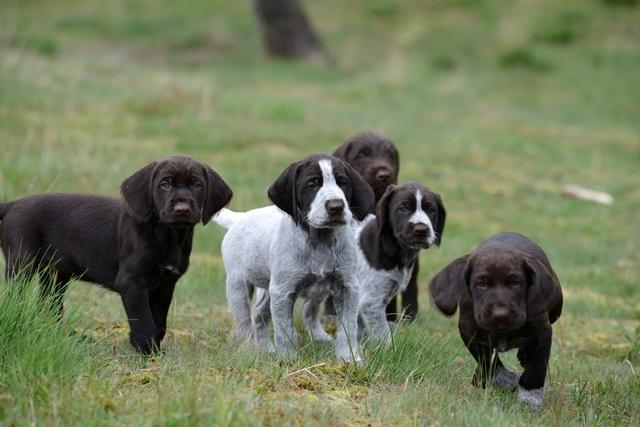 PuppiesBos (7)