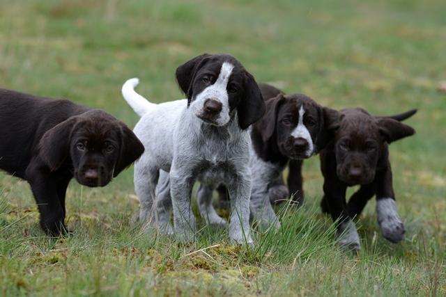 PuppiesBos (8)