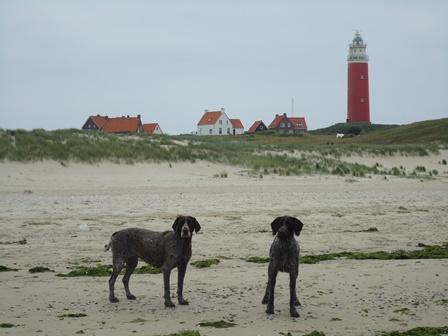 Texel4